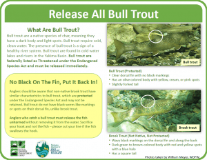 Bull_vs_Brook_Trout_ident